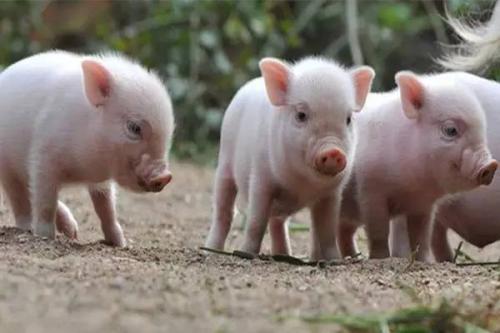 2019年03月16日全国各省生猪价格内三元价格报价表