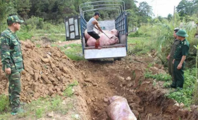 重庆发生非洲猪瘟疫情,已禁止所有生猪及其产品调出封锁区