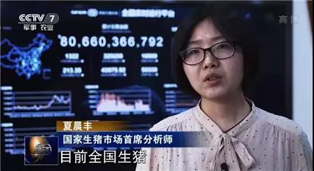 央视关注生猪市场:仔猪价格近千元,补不补栏?
