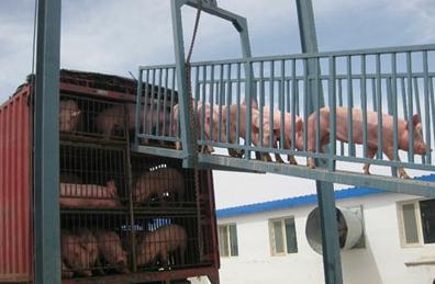 2020年7月起 中南区六省禁止调运活猪!