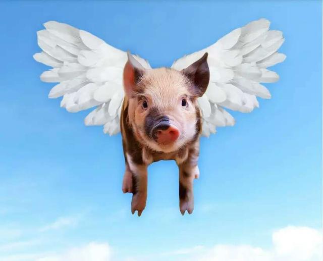 专家:猪价整体趋稳,4月初有望再涨!