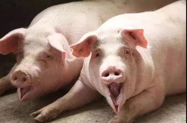 为走私生猪提供便利,广西龙州原打私办主任获刑13年