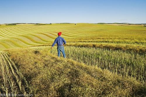 加拿大油菜籽价值百亿的转基因买卖,被中国叫停了!