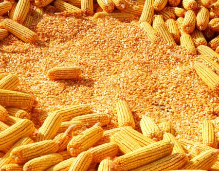 玉米拍卖96189吨价格下跌,豆粕仍是绿匆匆...