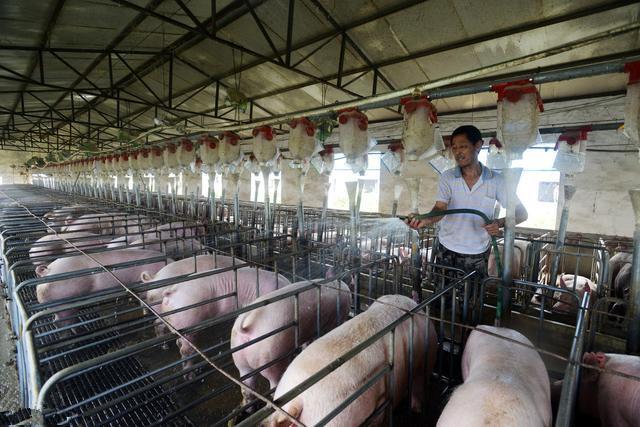 关于我国养猪业可持续发展问题的思考
