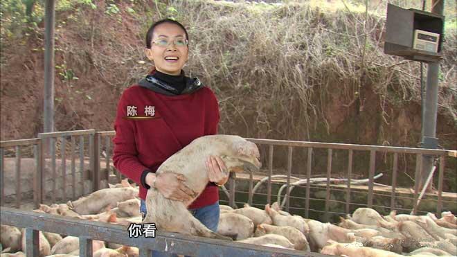 美国间谍监听中国,专门看CCTV-7军事频道,后来转行养猪变亿万富翁