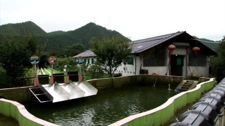 涡阳县一养猪场坚持生态优先理念