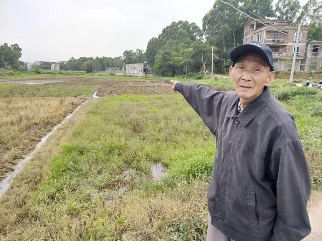 广东化州一村百亩稻田被养猪场污染!