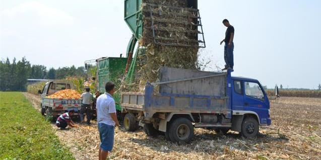 美国玉米进口成本同比大涨 国内华北小幅上扬东北则继续下跌