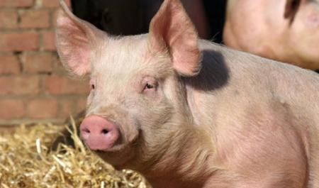 2019年04月03日全国各省生猪价格外三元价格报价表