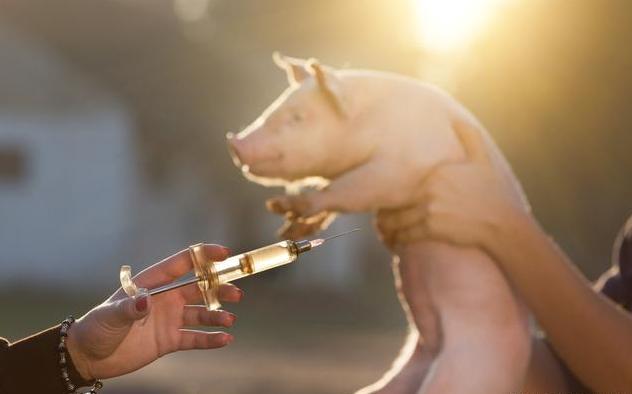 影响育肥猪出栏时间因素分析,探讨缩短育肥猪出栏时间的技术措施