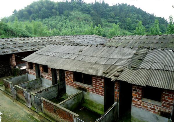 村民反应 自建养猪场干扰村民生活