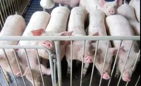 为应对生猪价格上涨超预期,襄阳市加大管控力度!