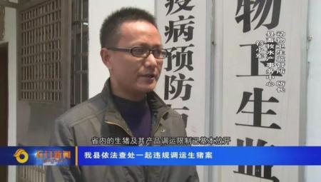 广西生猪被非法调运到石门,相关部门连夜扑杀