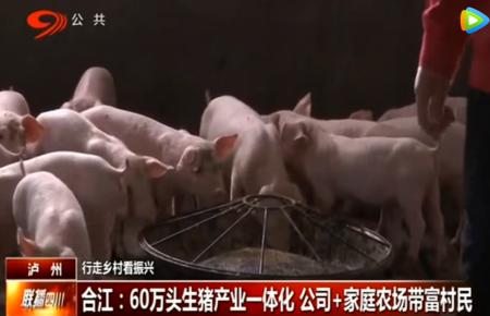 合江:60万头生猪产业一体化 公司+家庭农场带富村民