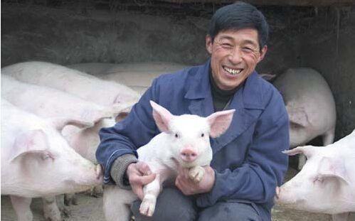 来自一位养猪人的心声:现在死的是猪,再养!死的可能就是我了