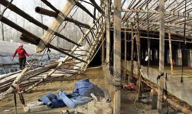 河南猪价一个月涨50% 散养户离场率已达五至七成?