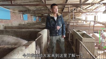 农村小伙分享养猪经验,如何更好的提高效益,值得收藏