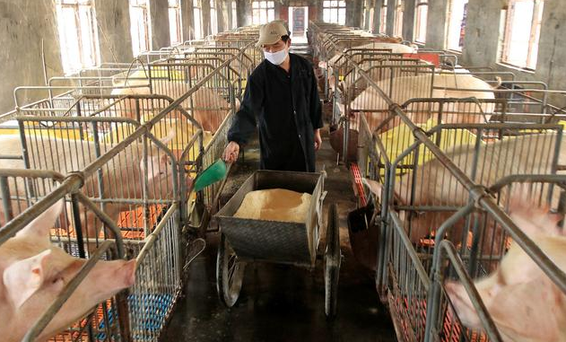 美国养猪的两个优势,美国养猪防疫工作值得我们学习