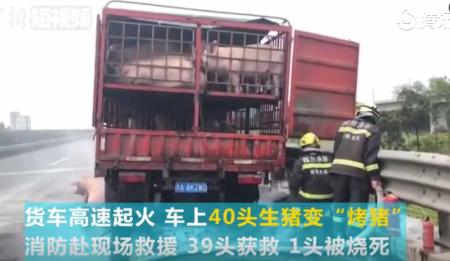 """4月13日 货车高速起火 车上40头生猪差点变""""烤猪"""""""