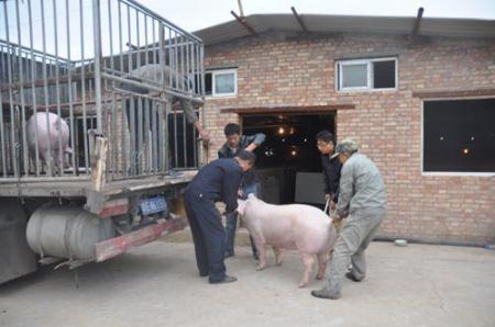 为何4月份猪价以下跌为主,难道猪价大涨没戏了?