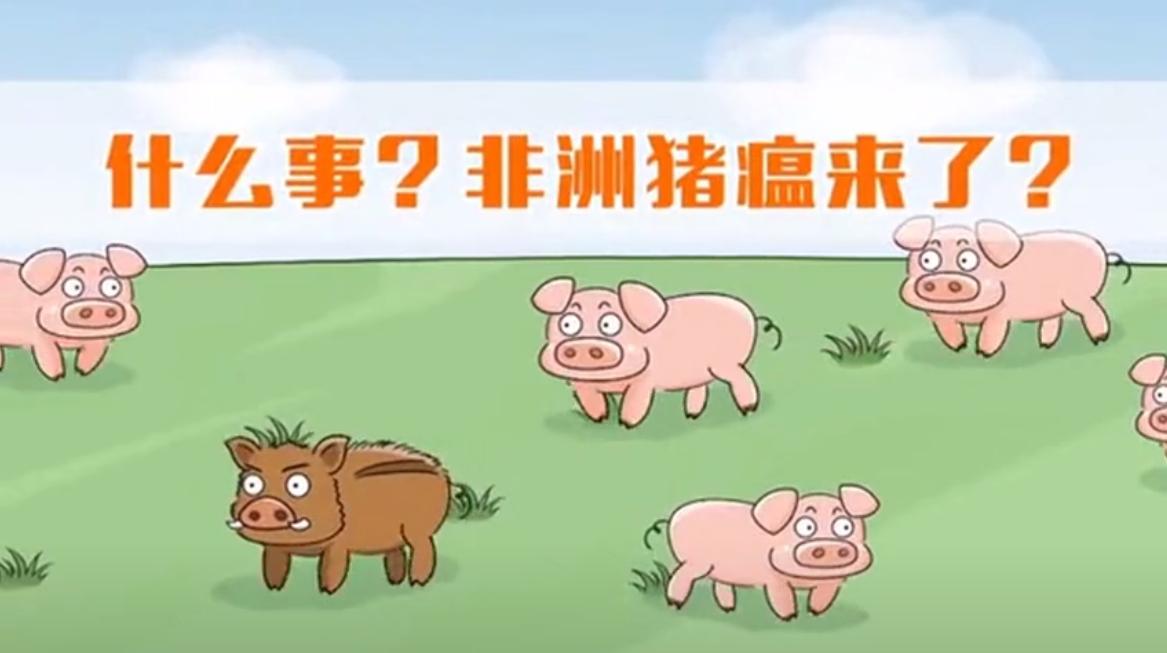 非洲猪瘟科普知识,正确认识非洲猪瘟的打开方式!