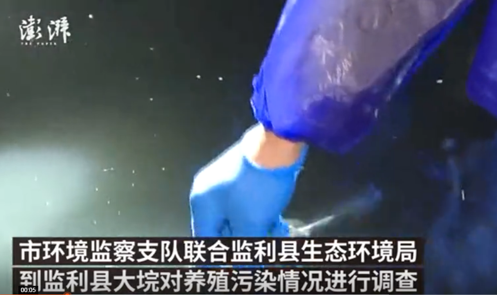 荆州一养猪场排污入长江,超标18.5倍