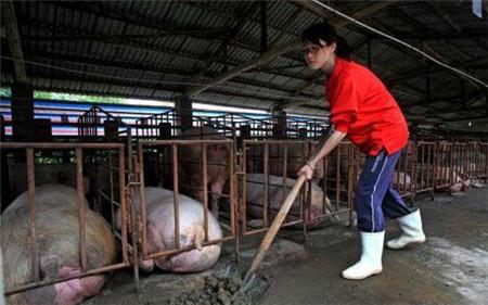 """猪场问题越来越多,危害也越来越大,猪场管理需从""""心""""抓起!"""
