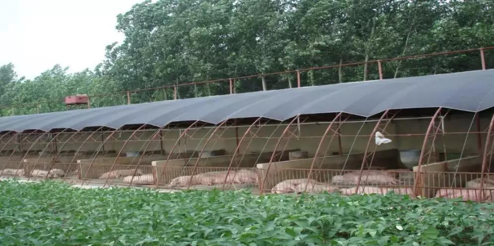 在非瘟面前,养猪业最大的资源就是家庭农场
