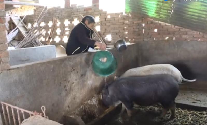 雷天梅:勤劳养猪 自主脱贫