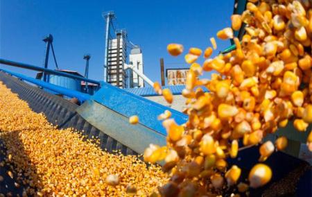 5月底玉米或现最后一波售粮小高峰
