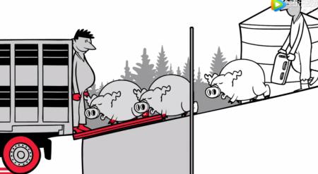 动画演示猪场生物安全二