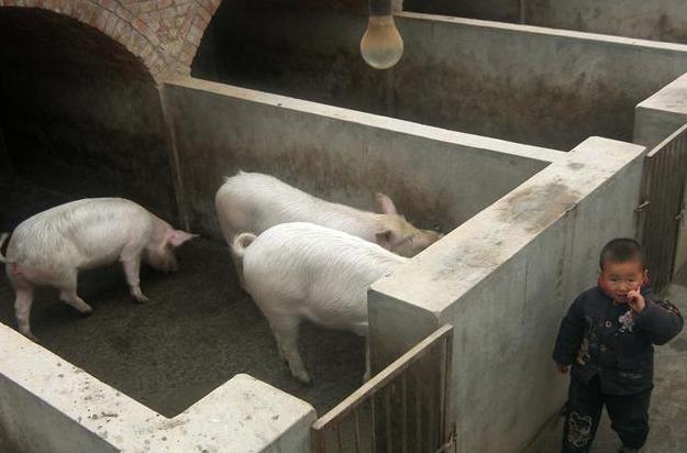 农村将不让禁养猪鸡?这四个区域才是禁养区