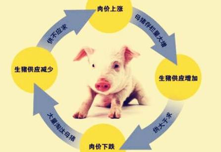 """同比降幅达10年来最大值 多方协调促平稳度过""""猪周期"""""""