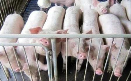 2019年04月23日全国各省生猪价格内三元价格报价表