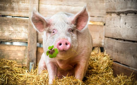 多地猪价翻红 玉米继续上涨