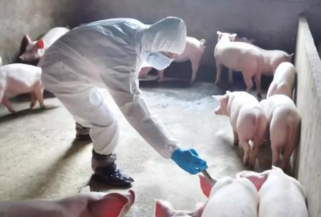 蓬溪县召开非洲猪瘟防控工作会,抓疫情排查促进畜牧业健康发展