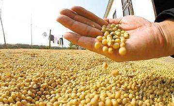 受政策补贴影响,东北大豆种植暴涨,玉米小降