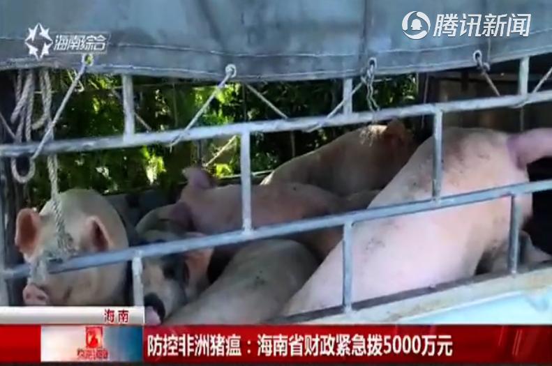 防控非洲猪瘟:海南省财政紧急拨5000万元