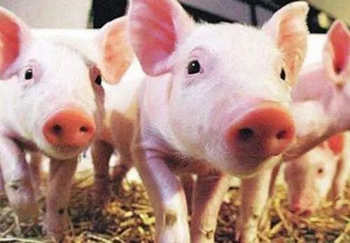 2019年04月27日全国各省生猪价格外三元价格报价表