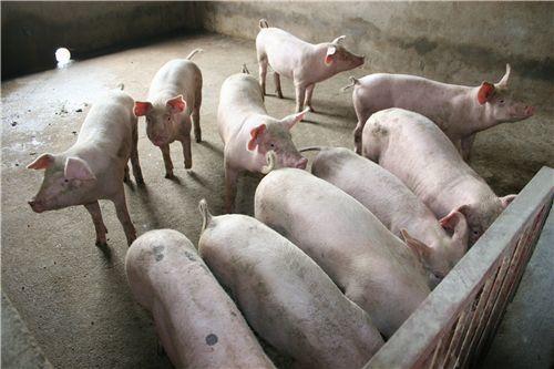 2019年04月27日全国各省生猪价格内三元价格报价表