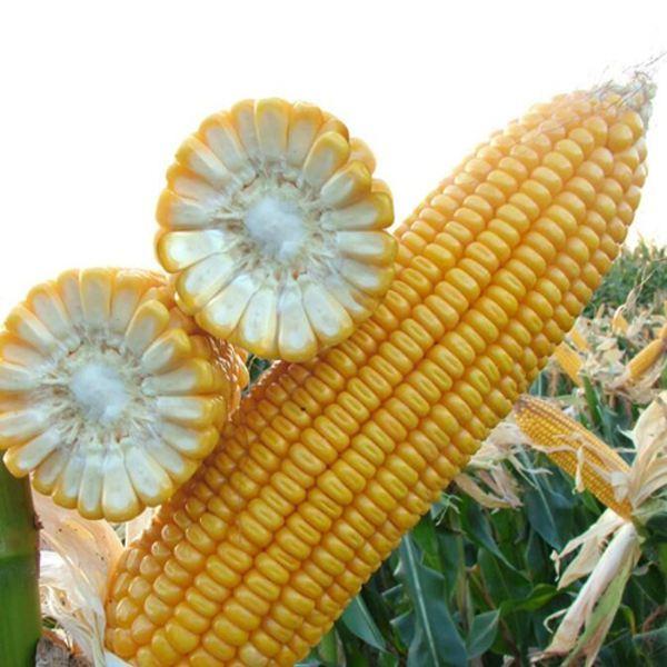 2019年04月27日全国各省玉米价格及行情走势报价表