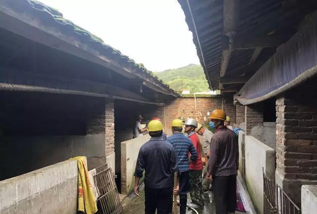 龙岩蓝溪镇打击违规生猪散养和山林放养,共拆除32家养殖场