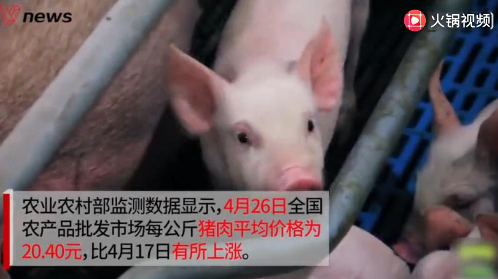 生猪存栏创1992年以来最低水平,猪价步入持续上涨通道