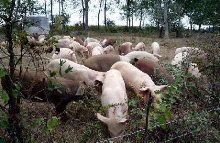 2019年05月02日全国各省生猪价格内三元价格报价表