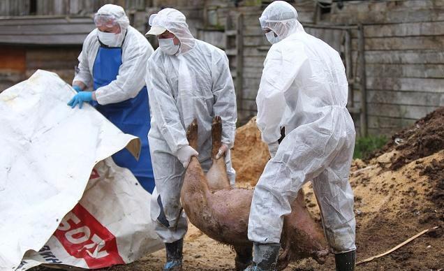 2019年4月非洲猪瘟疫情统计,新发非洲猪瘟疫情452起,中国17起