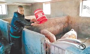 """木兰""""朱老六""""养猪记,带领乡亲们脱贫致富"""