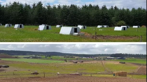 猪舍内可以应用户外养殖的原则吗?清洁与消毒、设施与管理