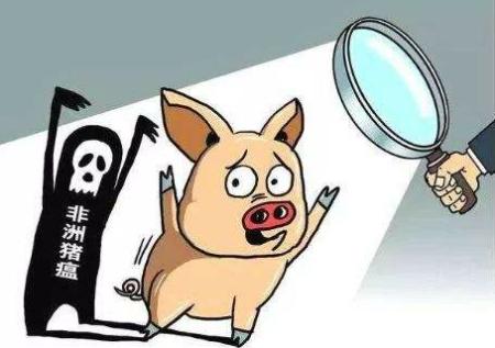 海南农科院专家:非洲猪瘟病毒的唯一宿主就是猪