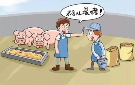 儋州一养猪户偷偷捡拾泔水喂猪 被行政拘留5天